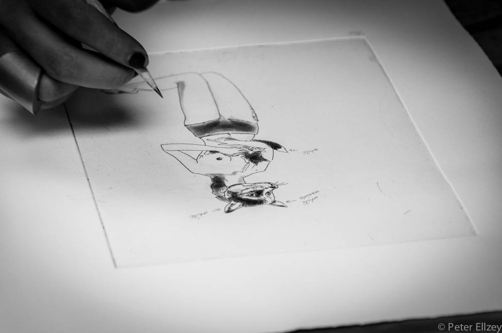 Peregrine-115.jpg