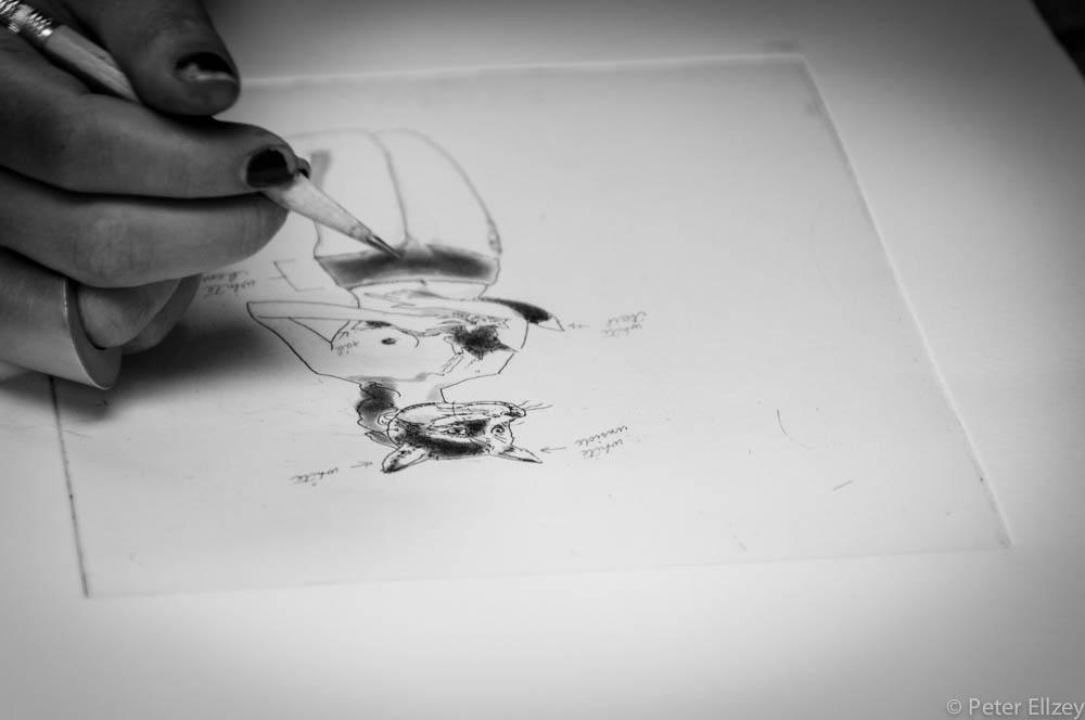 Peregrine-116.jpg